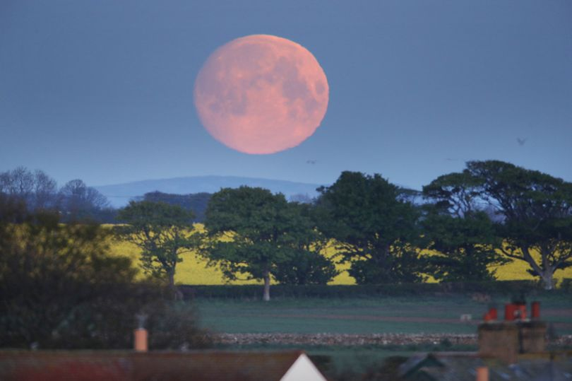 Flower Moon to light up skies tomorrow – and it will be 30% brighter than normal